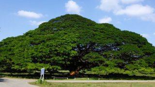 カンチャナブリの神木(Giant Monkey Pod Tree)をバックに長澤まさみが出演した「エビータ ボタニバイタル」新TVCMが放映中