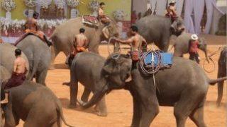 タイでは3月13日が「ゾウの日」日本は4月28日そして「世界ゾウの日」は8月12日