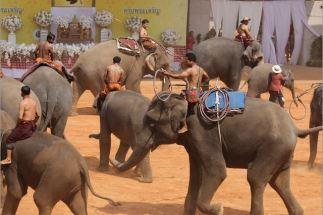タイのゾウの日