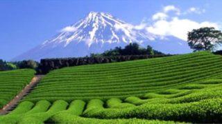タイ・チェンライのお茶2商品が金賞を獲得~「世界緑茶コンテスト2020」