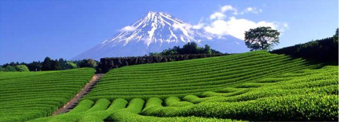 世界緑茶コンテスト2020